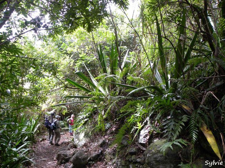 Sur le sentier de l'îlet Fleurs Jaunes / Cirque de Salazie / Ile de la Réunion