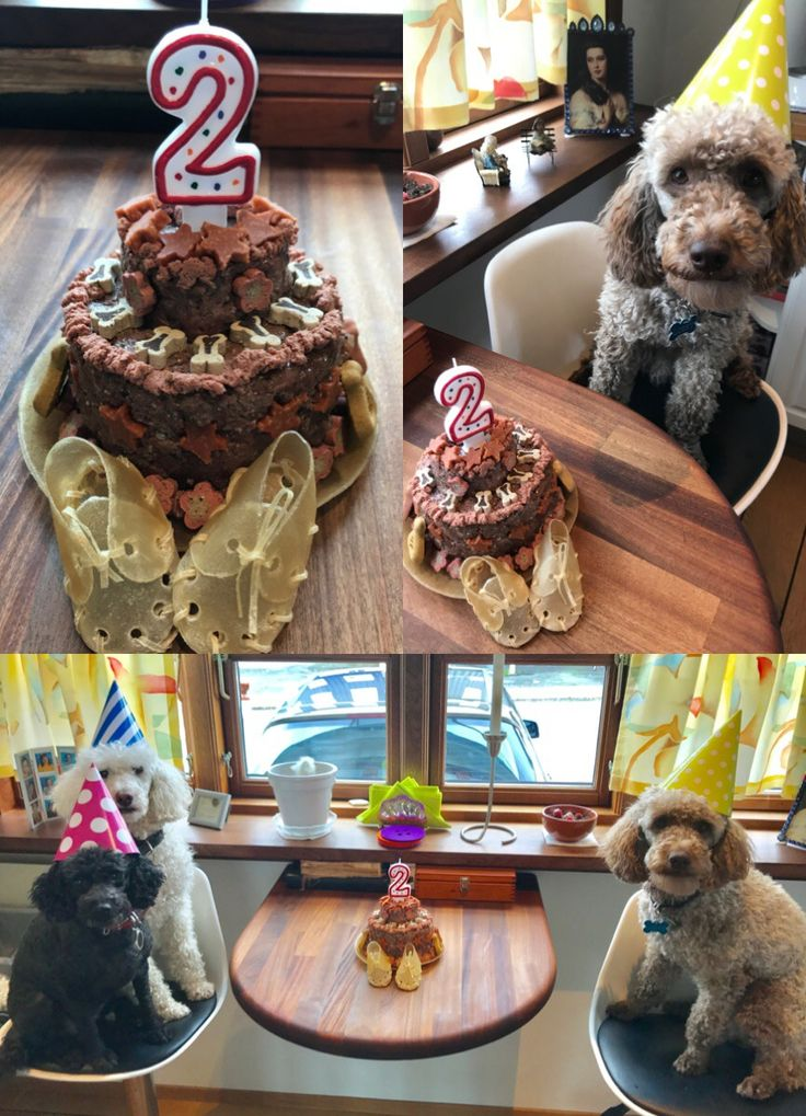 Dog friendly cake