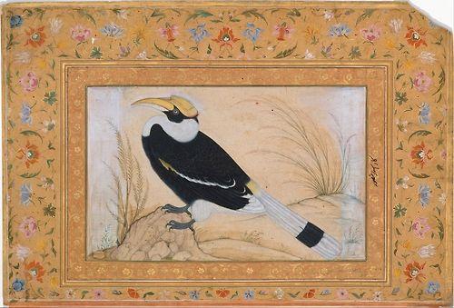 Great Hornbill, Folio from the Shah Jahan Album. Painting by Mansur, ca 1615-20. (via The Metropolitan Museum of Art)