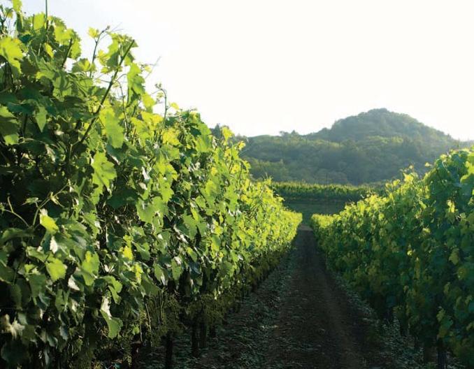 Hopper Creek Vineyard