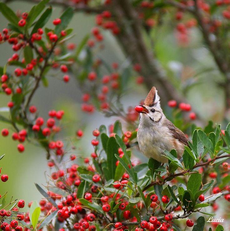 Красивые фотографии птиц и весенних цветов от фотографа Lucia Lin (Тайвань)