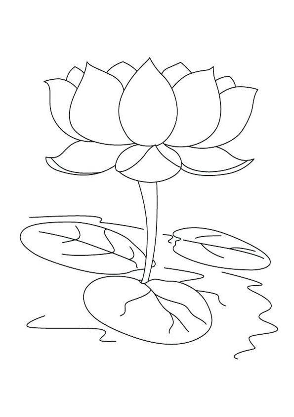 Beautiful Lotus Coloring Pages Lotus Flower Colors Lotus Flower Art Lotus Flower Drawing