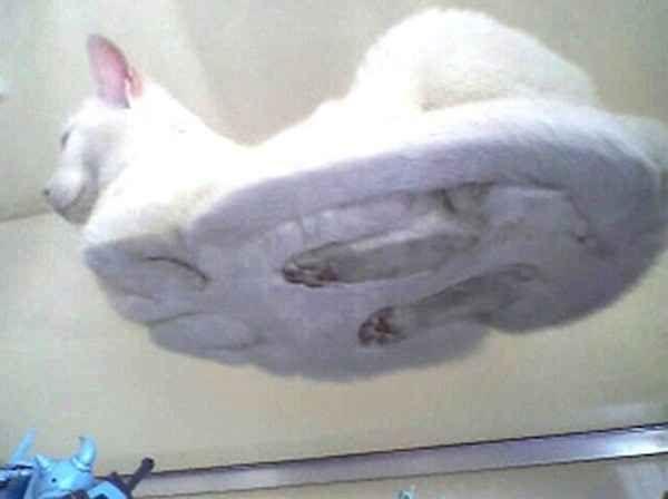 Katzen sind die süßesten Tiere auf diesem Planeten, wie auch wissenschaftlich bestätigt* ist.