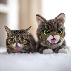 Your Very Own BUB (Plush Toy) - ON SALE