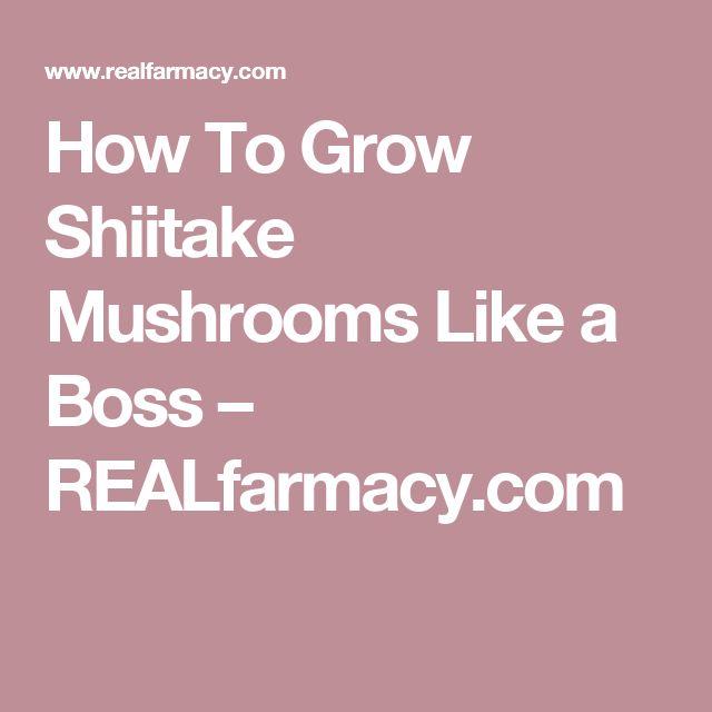 How To Grow Shiitake Mushrooms Like a Boss – REALfarmacy.com