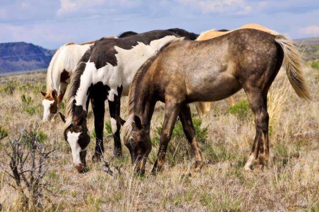 Horses Dog Food Glue