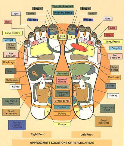 FOOT MASSAGE CHART - Massage points to stimulate body organs etc. Reflexology Institute.