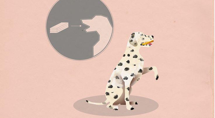 Hält Kopf und Körper des Hundes fit: das DOGS Indoor-Training für mehr Aufmerksamkeit, Beweglichkeit und Koordination.