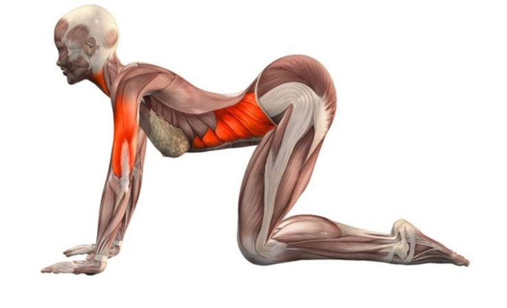 Предлагаемые упражнения улучшают кровоснабжение нижних конечностей и органов малого таза. Эти упражнения — профилактика болей в тазобедренных и коленных суставах.