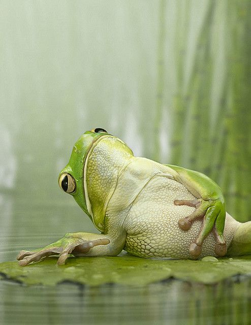 Frog belly...
