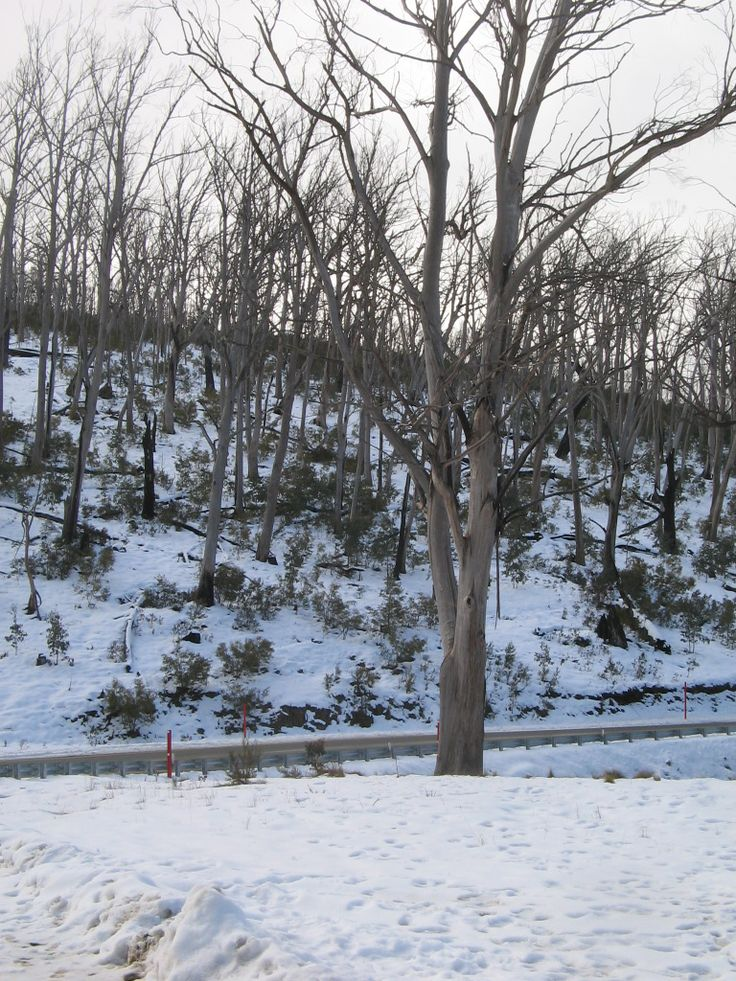this is at the snow fields down near Tumut N.S.W