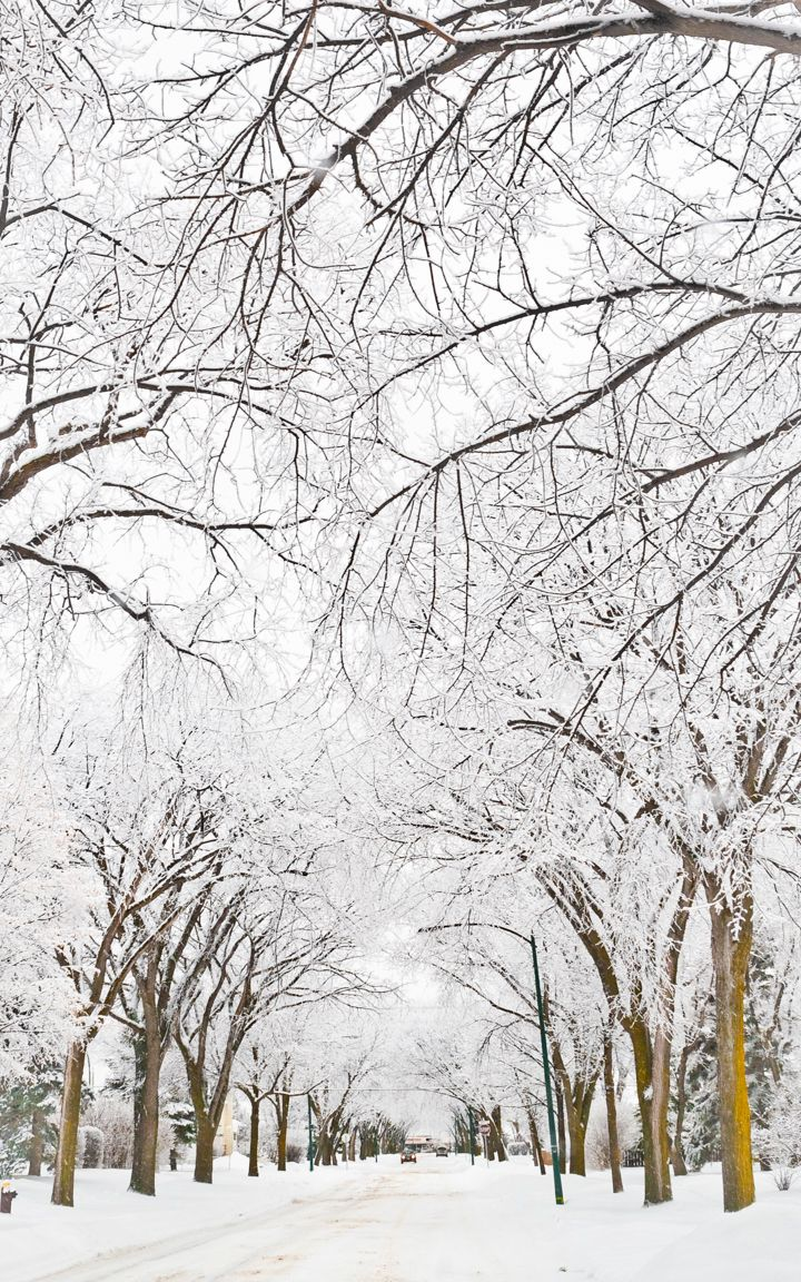 Winter Wonderland in Winnipeg, Canada - Image by Carla Dyck