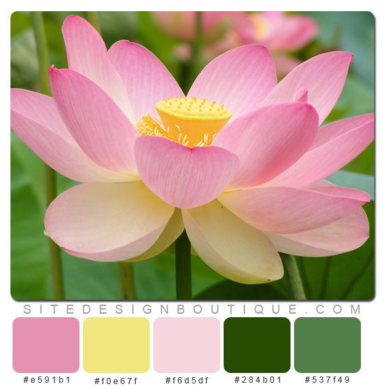 I am a nut for flowers and this one is inspiring! GN  Pink and Green Springtime Color Scheme - Website Design Boutique
