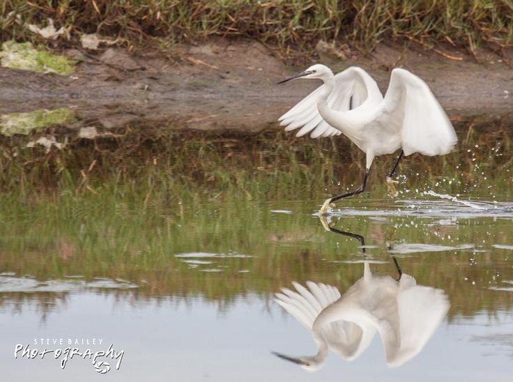 Mirror image  by SteveBailey