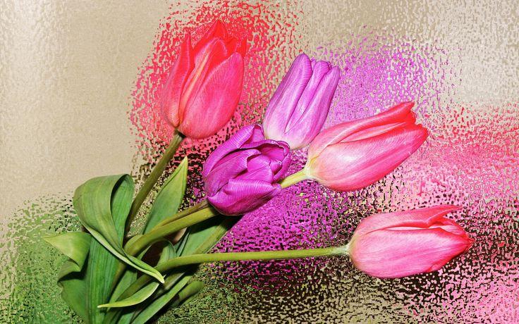 Скачать обои bokeh, лето, tulips wallpapers, лепестки, hd wallpapers, hd обои, боке, цветок, тюльпаны, свет, широкоформатные, летние обои, цветки, весна, flowers bokeh, flowers hd, позитив, обои скачать бесплатно, заставки на рабочий стол, обои для компьютеров, свежесть, зелень, обои для компьютера, заставки на компьютер, широкоэкранные картинки, раздел цветы в разрешении 1920x1080