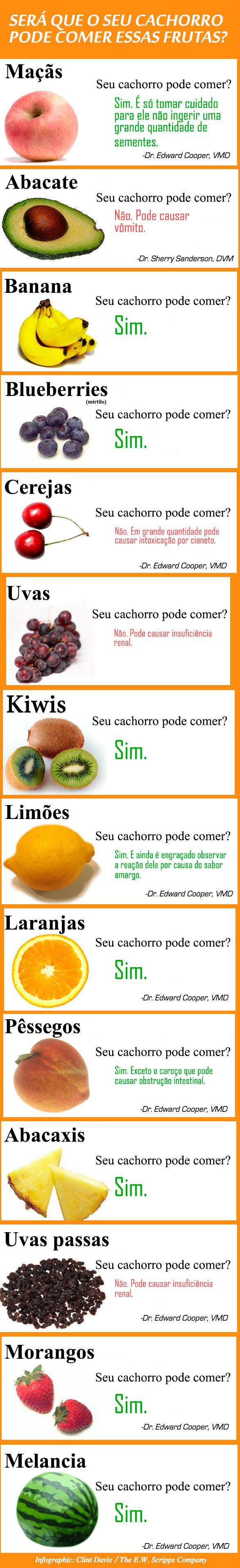 Você sabe quais frutas seu cachorro pode comer e quais não deve dar a ele de jeito nenhum? Descubra com esse infográfico.