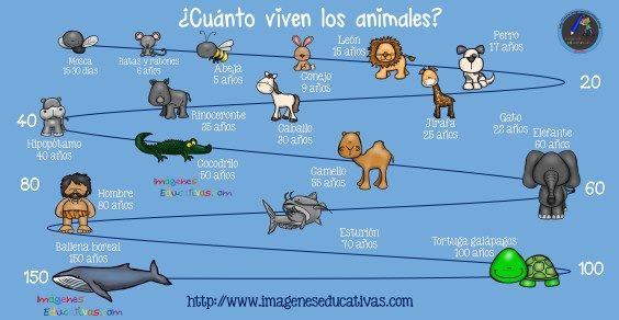 ¿Cuántos años viven los animales? - Imagenes Educativas