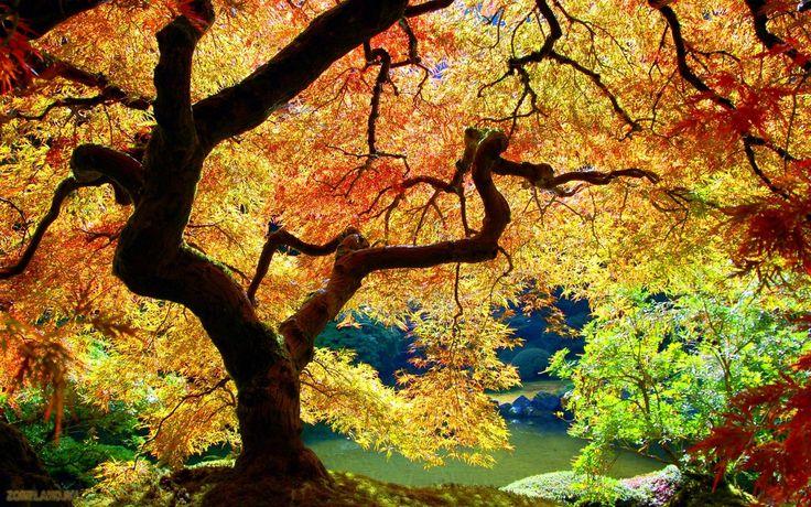 Bilderesultat for høstbilder
