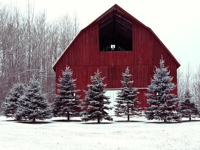 Red barn surrounded by snowy evergreen trees