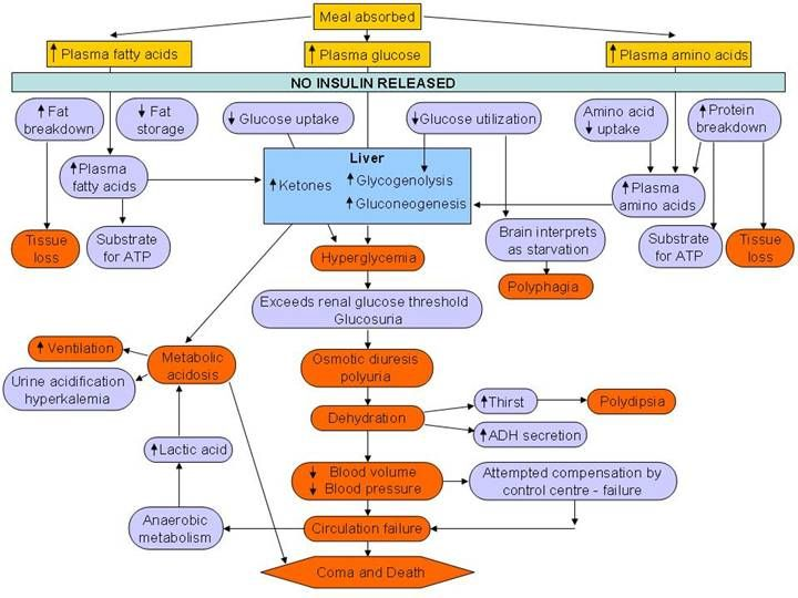 Patho concept map for Diabetes Mellitus | Nursing School