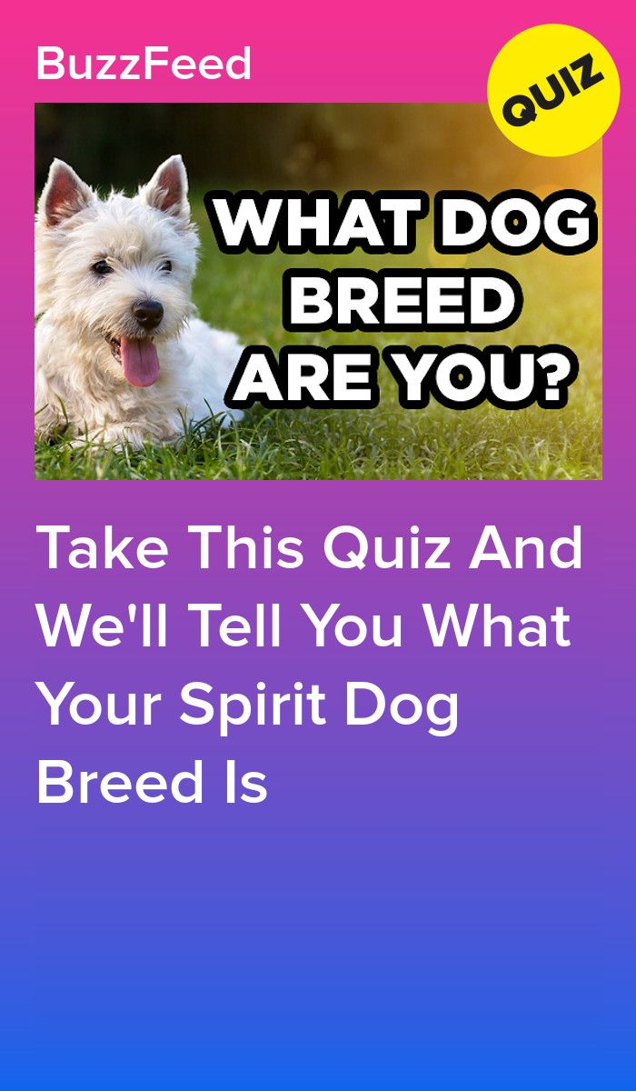 Take This Quiz And We Ll Tell You What Your Spirit Dog Breed Is Dog Quizzes Dog Breeds Dog Quiz