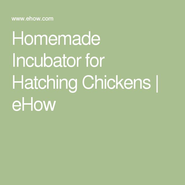 Homemade Incubator for Hatching Chickens   eHow