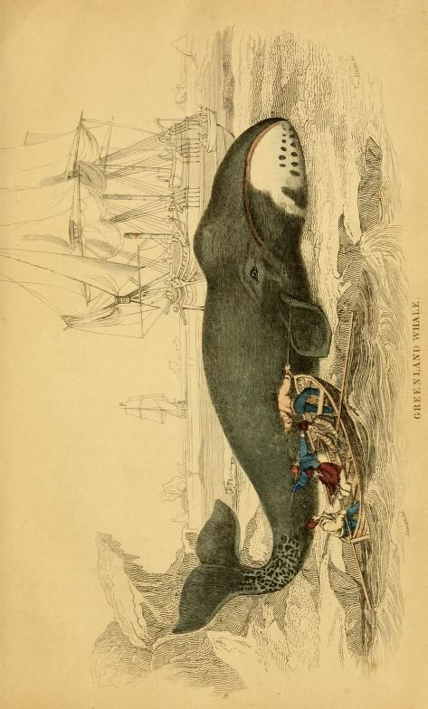 17 best images about dolphins and whales on pinterest for Hamilton fish library