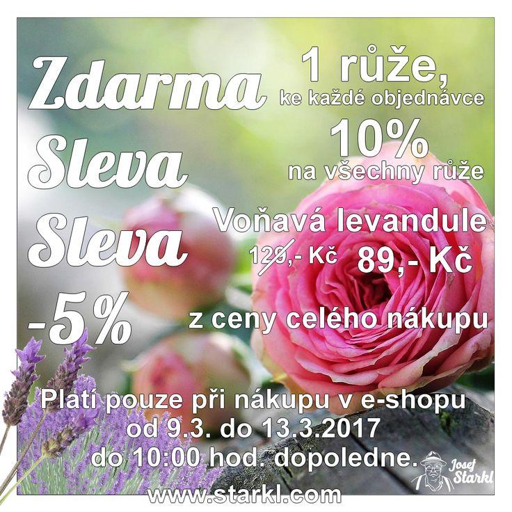 ZDARMA - SLEVA - NEVÁHEJTE, OBJEDNEJTE - UŠETŘÍTE. ZDARMA 1 růže ke každé objednávce; SLEVA 10% na všechny růže; SLEVA na levanduli - původně 129,- Kč, nyní 89,- Kč; SLEVA 5% z ceny celého nákupu. ČASOVĚ OMEZENO! Platí pouze pro objednávky učiněné v e-shopu od 9.3. do 13.3.2017 do 10:00 hod. dopoledne.