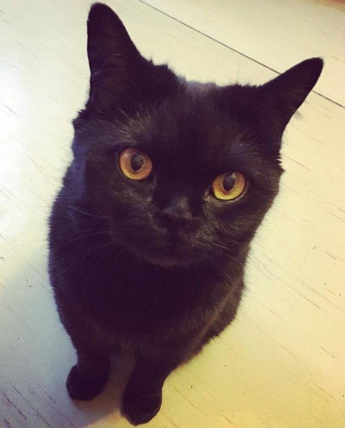 60 Evil Cat Names Evil Cat Cat Names Cats