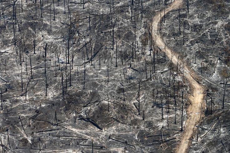 Forest fires, allegedly set by farmers and cattle ranchers, in Mato Grosso, Brazil. August 2008. Rodrigo Baleia