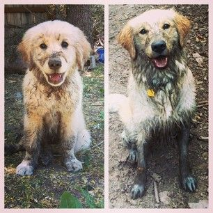 26 Muddy Dogs Who Want You To Have Fun