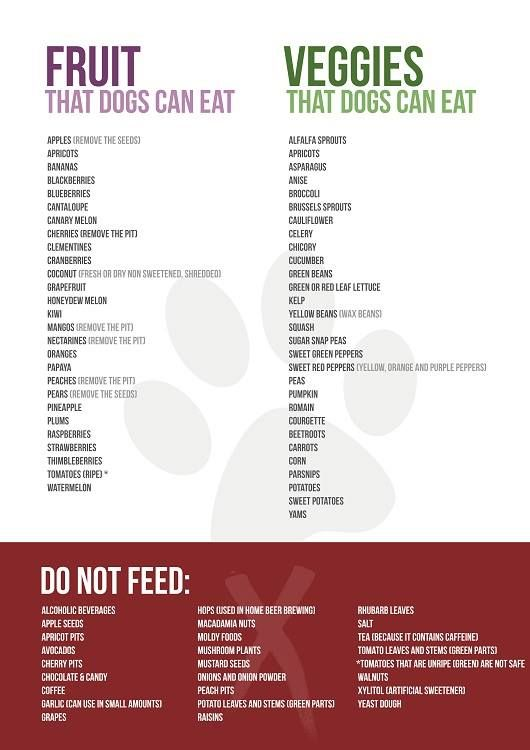 fruit and vegetables ok for dogs