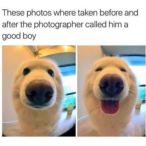What a good boy
