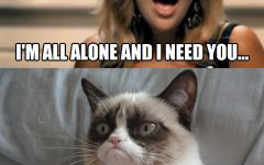 Angry Cat Meme Images About