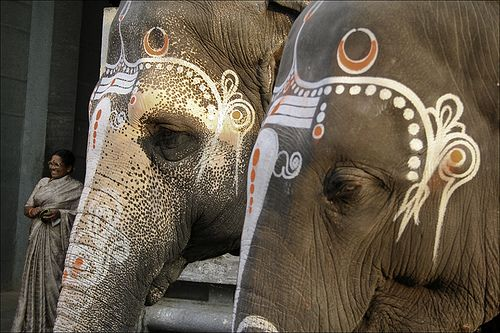 Elephants at the temple entrance in Kanchipuram, elephants give blessing to the faithful.