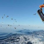WWF has welcomed a revised and improved Marine Stewardship Council (MSC) sustainable fisheries standard. The new standard, published this week, lifts conservation requirements on fisheries, excludes shark finning on certified fishing vessels and bars companies with convictions for employing forced labour from certification.