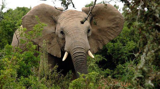 Bitte unterschreiben: EU darf kein Komplize der Wilderer sein