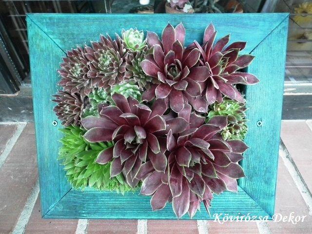 succulent living picture, kövirózsás élőkép   Kövirózsa Dekor
