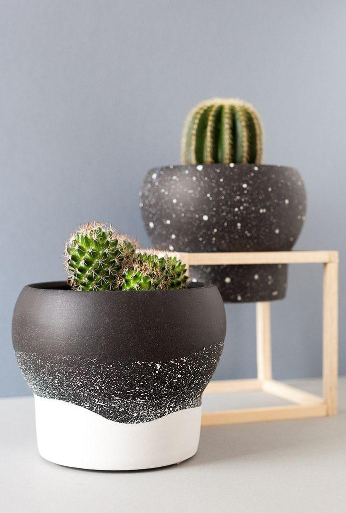 M s de 1000 ideas sobre soportes de plantas en interiores - Cactus en macetas pequenas ...