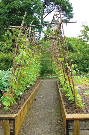 SC Outside > Growing up: Trellising your plants.  Love the idea of using sticks and small branches for trellises, particularly our beans.  Will try this year.  Have plenty of 'supplies' on our property!