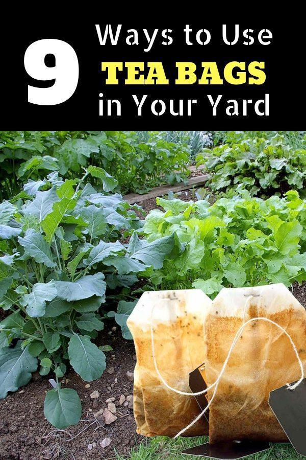 Use Of Tea Leaves In Gardening