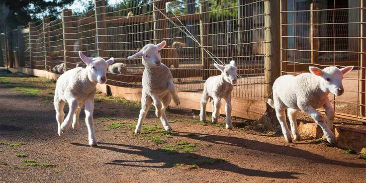 #Türcülük ve hayvan istismarının acı gerçekleri-  #HayvanHakları #veganlık