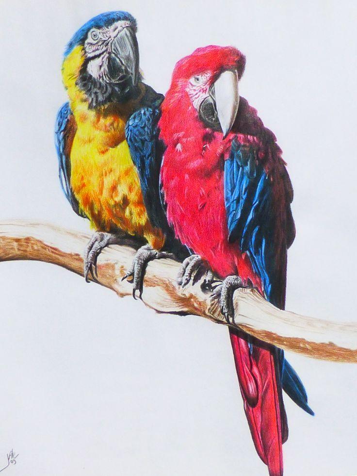 GUACAMAYOS Dibujo con lápices de colores 60 x 40 cm