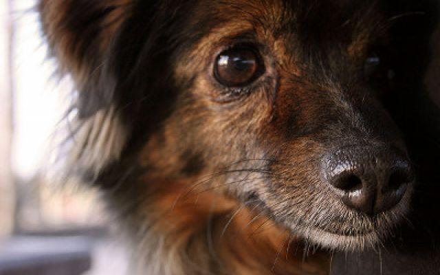 Voglio adottare: il cane meticcio Il cane meticcio è il risultato dell'incrocio tra due cani di razze diverse, o di due meticci a loro volta. Le caratteristiche di questi animali non ci saranno ben chiare fino a quando non crescerann #meticcio #cane #enpa #adozione