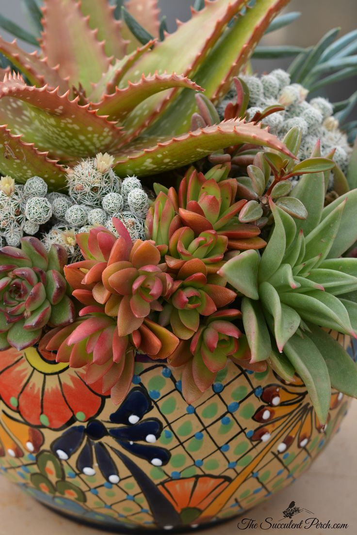 Colorful potted succulents-saved by Gill Smith
