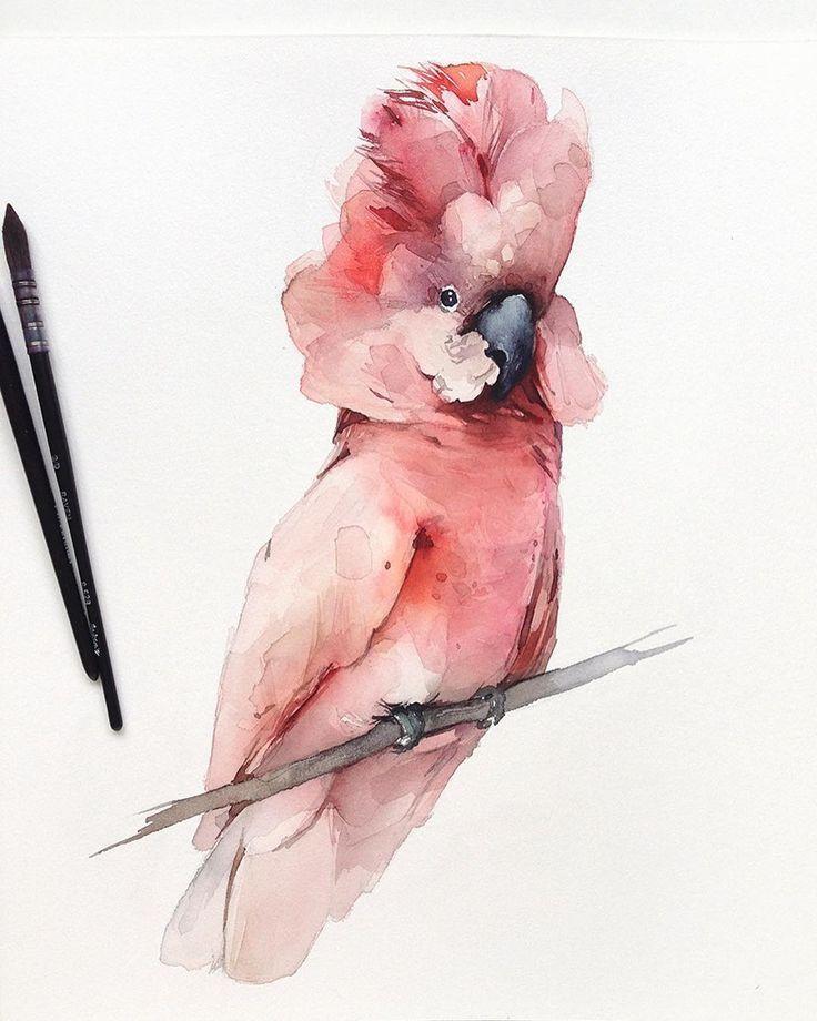 Acuarelais Acuarelais En 2020 Oiseau En Aquarelle Animaux D