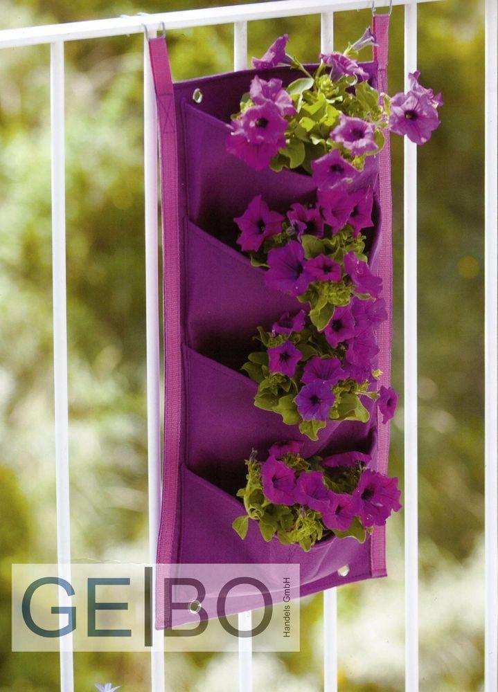 Die besten 25+ Lila pflanzen Ideen auf Pinterest Voller sonne - pflanzen topfen kubeln terrasse
