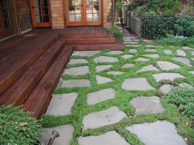 Patio Ground Cover Ideas patio ground cover ideas soleirolia soleirolii babys tears Dry Laid Bluestone Patio With Groundcover Traditional Patio