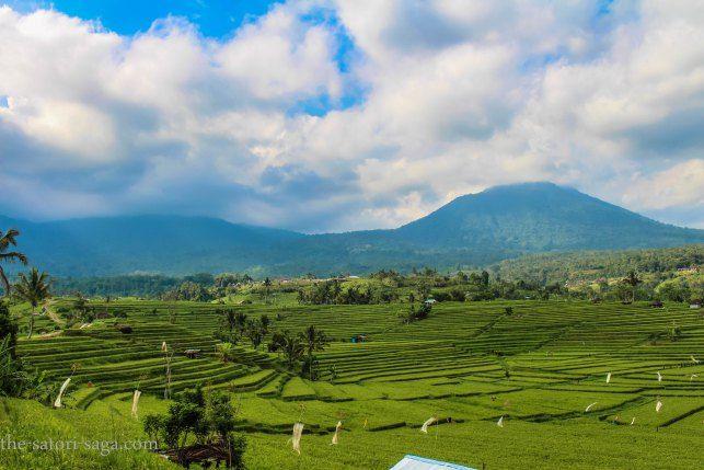 Bali Motorbike Travel Guide. Jatiluwih Rice terrace