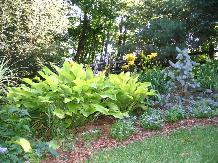2836 best Flower Gardening images on Pinterest Flower gardening